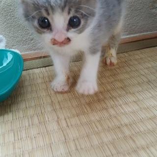 悶絶 かわゅい 生後3週のネコちゃん