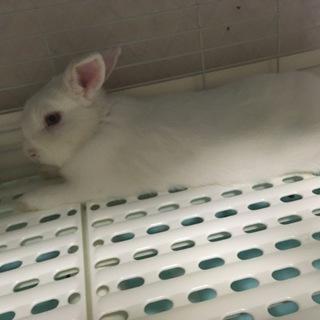 可愛いウサギのみーちゃん