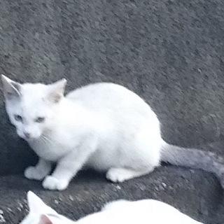 元気な白猫の弟です