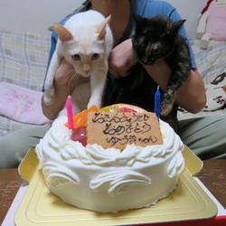 二歳、おめでとう!