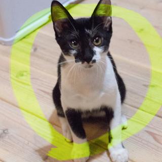 ぬいぐるみ猫むつ♡猫カフェ、初心者向き4ヶ月