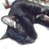 甘えたさんな黒猫くん サムネイル5