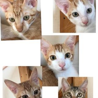 生後5ヶ月兄妹猫の里親さん募集します。