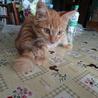 ふわふわしっぽの子猫です