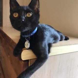 くまみたいな黒猫子猫♂