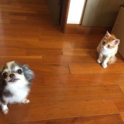 保護猫「吉田さん」の観察日記.9 plus番外
