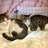【東京武蔵小山】穏やかな懐っこい美猫姉妹ペアで