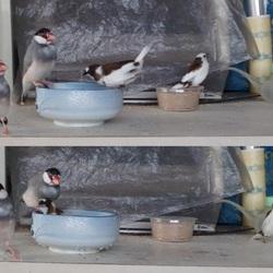 小鳥たちのようす(その7)