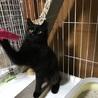 半長毛の黒猫モジャちゃん 幸運のカギしっぽ サムネイル3
