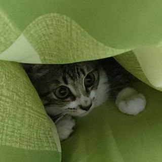 『アイル』お布団の中で添い寝