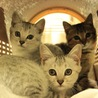 三匹の子猫ちゃん♫