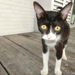 ちょっと個性的な顔立ちの子猫の里親さん募集