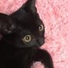 子猫♡黒猫♡抱っこもお膝も大好き甘えん坊