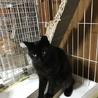 半長毛の黒猫モジャちゃん 幸運のカギしっぽ サムネイル2