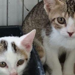 10月8日(日)三重県桑名市 第72回リトルパウエイド猫の譲渡会