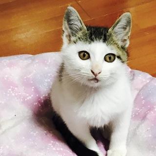 ハート柄❤子猫ちゃん!