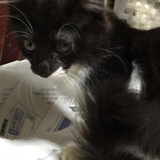 ふわふわな毛の可愛い子猫ちゃん