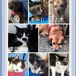 わんにゃん小梅保育園☆飯能で犬猫譲渡会&バザー★子猫も多数 サムネイル2