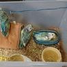 小桜インコの放鳥について
