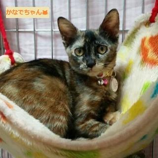 臆病だけどとても可愛いサビ猫ちゃん♪
