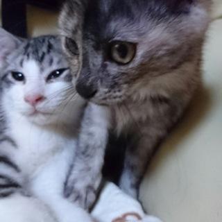 三月生まれの子猫3匹 家族の一員にして下さい!