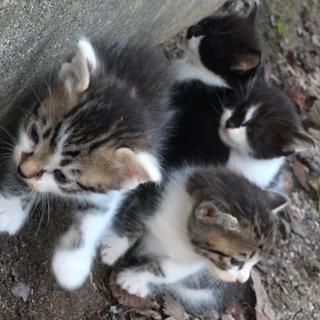 里親さん募集!かわいい子猫達!