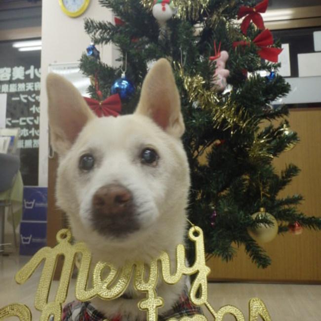 アニマー湯千葉店のカバー写真