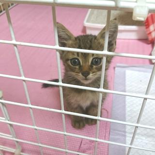 保護した子猫の里親募集!生後約1ヵ月の男の子!