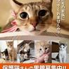 猫さんの譲渡会
