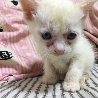 急募!可愛い子猫!