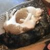 親子猫3匹の里親募集(弟猫) サムネイル3