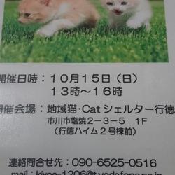千葉 市川市 Catシェルター行徳  猫の里親会