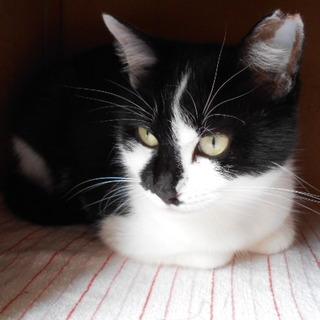 白黒猫のピンキーちゃん ♪ 1歳6ヵ月