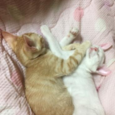 寝ながら猫パ~ンチ