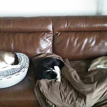 ストーブをつけたリビングから動かず。猫用ソファー化。