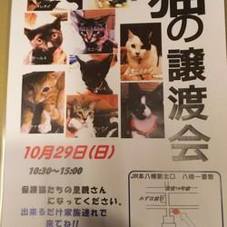 10/29本八幡駅前、猫譲渡会開催