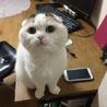 allycat