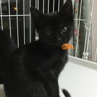 そっくり黒猫5兄妹