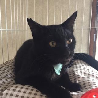☆黒猫のベイくん☆