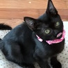 小柄で小顔の可愛い黒子猫 好奇心旺盛