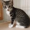 10月7日(土)~10月20日(金)猫とのふれあい会&譲渡会(里親会)