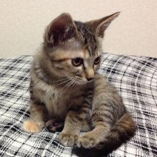 お宝子猫6兄弟 ムギワラ
