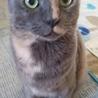 かわいいサビ猫の女の子