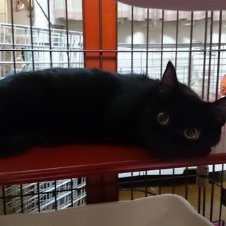 ◆甘えん坊の黒猫さん◆