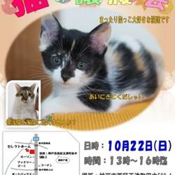 神戸西区玉津町 猫の譲渡会
