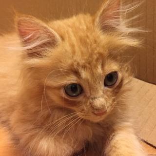 茶トラ子猫ちゃん
