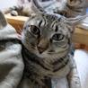 甘えん坊で内弁慶のお転婆猫ちゃん サムネイル2