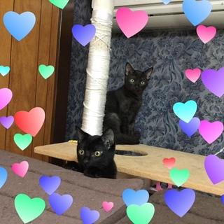 仲良し黒猫兄弟♪