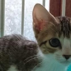 三重県桑名市10月15日(日)ほんわか猫な日々 猫の譲渡会