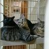 ネグレストから解放された黒猫、カール君 サムネイル4